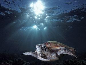 Turtle Sipadan