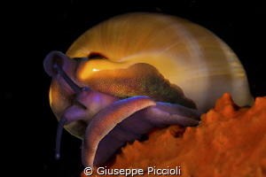 The Jewel/ A second shot of the Mediterranean Luria lurid... by Giuseppe Piccioli