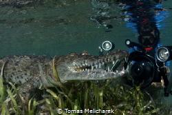Sea Crocodiles by Tomas Melicharek