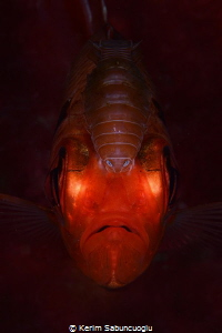 The Parasite eating the fish alive. by Kerim Sabuncuoglu