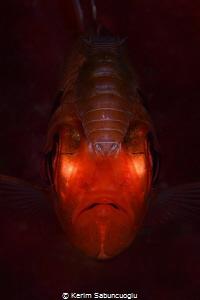The Parasite eating the fish alive. by Kerim Sabuncuoglu