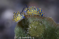 Dance/ When my dive guide found this cute spouse, I smile... by Darlene Lu