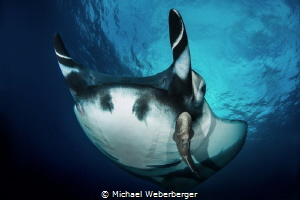 Air Power ,incredible to dive with these giants,Socorro I... by Michael Weberberger