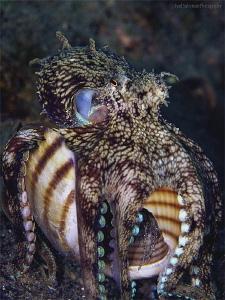 Octopus - invader by Iyad Suleyman