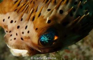 The Eye by Carla Tymkow