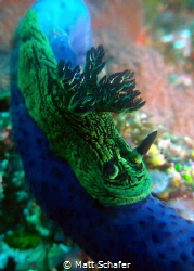 I found this Nembrotha kubaryana somewhere in the Komodo ... by Matt Schafer