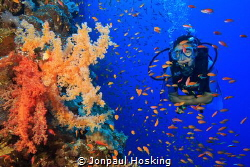 Diver swims alongside colourful soft corals. by Jonpaul Hosking