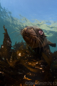 SEa Lion Portrait