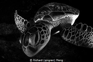Kiss Me by Richard (qingran) Meng