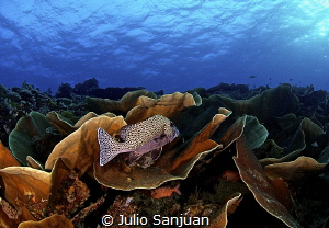 Trought the Coral in Palau. by Julio Sanjuan