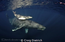 As soon as we hit the water we expected this pair to shy ... by Craig Dietrich