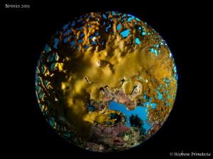 Planet coral IV by Stéphane Primatesta