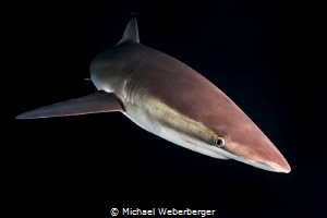 Night dive whit Silky,s by Michael Weberberger