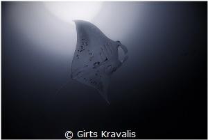 Manta ray by Girts Kravalis