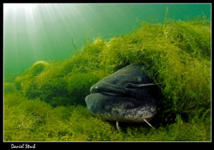 Catfish :-D by Daniel Strub