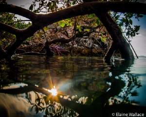 Surfacing in the mangroves late in the afternoon in Komodo. by Elaine Wallace