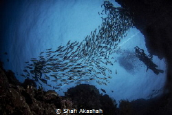 Group of diver, drifting at Barracuda Point During Dawn Dive by Shah Akashah