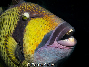 Nosy trigger fish by Beate Seiler