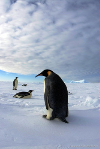 Walking on sea ice - Terra Nova Bay - Antarctica by Marco Faimali (ismar-Cnr)