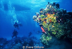 Waiting for the rest of the divers to submerge by Dave Difiore