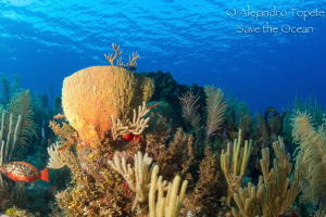 Reef in Paradise, Gardens of the Queen, Cuba by Alejandro Topete