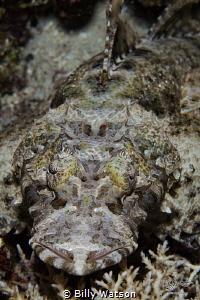 Laying Low - Crocodile Fish by Billy Watson