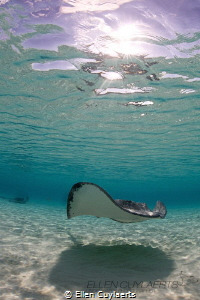 Stingray at dawn by Ellen Cuylaerts