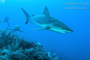 Sharks on the Reef, Gardens of the Queen Cuba by Alejandro Topete