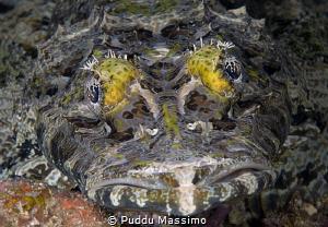 gangga island nikon d800e 105 micro by Puddu Massimo