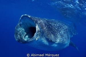 Whaleshark by Abimael Márquez