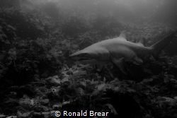 Freediving 10m deep using 5dmark1 with 17-40mm. Local res... by Ronald Brear