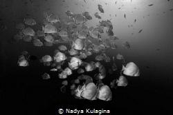 Silvery sides... by Nadya Kulagina