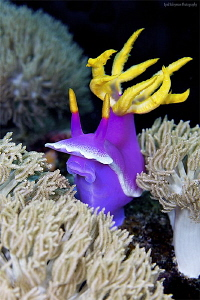 Nudi in his kingdom by Iyad Suleyman