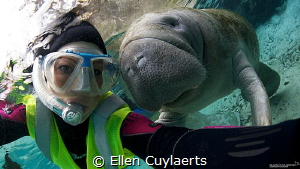 One of my top encounters in 2013! This female manatee fol... by Ellen Cuylaerts
