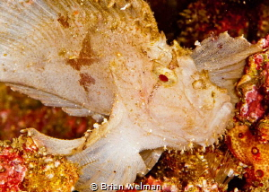 White Leaf Fish by Brian Welman