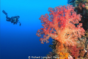 Coral Delight by Richard (qingran) Meng