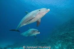 Pair of dolphins swim up close. Magic by Jonpaul Hosking