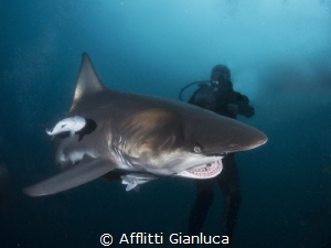 shark 1 by Afflitti Gianluca