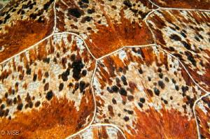 Young turtle pattern. by Mehmet Salih Bilal
