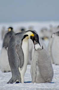 Dinner on the sea ice - Cape Washington, Antarctica 