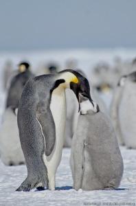 Dinner on the sea ice - Cape Washington, Antarctica   T... by Marco Faimali (ismar-Cnr)