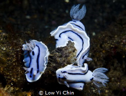 They gathered together does look like china blue porcelai... by Low Yi Chin