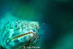 Lizard Fish by Ken Penner