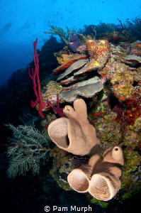 Layers of Babylon   /  To me, this reef scene represents ... by Pam Murph
