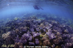 Shallow soft coral off the Island of Caqalai. by Michael James Sealey
