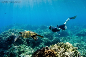 The Turtle Cleaning station in the Morning Puako, Hawaii by Pat Gunderson