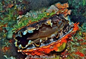 Clam's colors by Julio Sanjuan