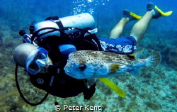 An instructor from Dolphin Dive -- in Little Corn, Nicara... by Peter Kent