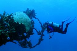 Diver and the crows nest of the Antilla. Aruba 11-05. Nik... by Matthew Shanley