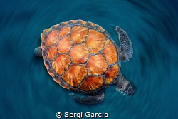 spin:The high angle shot shows the colour contrast of the... by Sergi Garcia